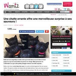 Une chatte errante offre une merveilleuse surprise à ses sauveurs ! - Sauvetage - Wamiz