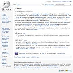 Mesohyl