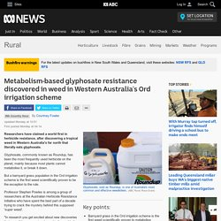 ABC_NET_AU 02/12/19 Metabolism-based glyphosate resistance discovered in weed in Western Australia's Ord irrigation scheme