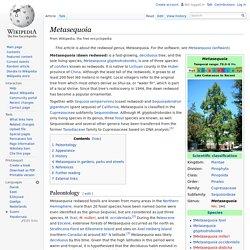 Metasequoia (WIKI) [EN]