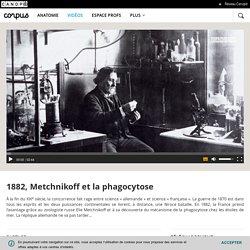 1882, Metchnikoff et la phagocytose - Corpus - réseau Canopé