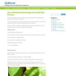 Une méthode de bouturage en vert semi-aoûté.