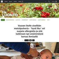 """Vauvan iholle sivellään metsäpulveria - """"hyvä lika"""" voi suojata allergialta ja sitä tutkitaan nyt ensimmäistä kertaa ihmisellä"""
