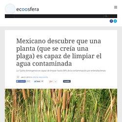 Mexicano descubre que una planta (que se creía una plaga) es capaz de limpiar el agua contaminada