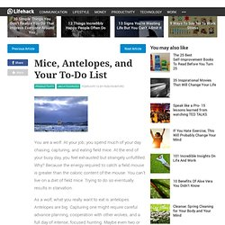 Mice, Antelopes, and Your To-Do List