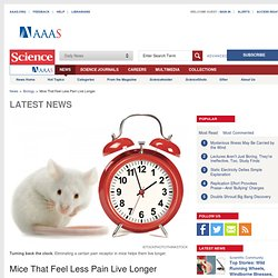 Mice That Feel Less Pain Live Longer
