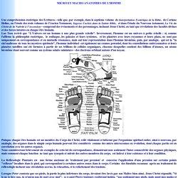 Micro et Macro Anatomies de l'Homme