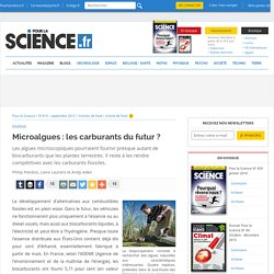 Microalgues : les carburants du futur ?