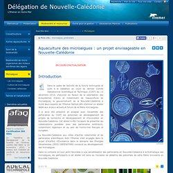 Microalgues - Délégation de Nouvelle-Calédonie