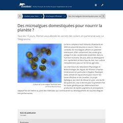 Des microalgues domestiquées pour nourrir la planète ? - Ifremer