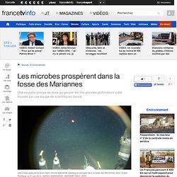 Les microbes prospèrent dans la fosse des Mariannes