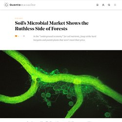 Soil's Microbial Market Shows the Ruthless Side of Forests