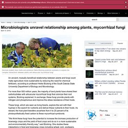 Microbiologists unravel relationship among plants, mycorrhizal fungi