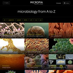 microbiology from A to Z - Micropia