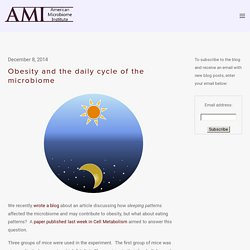 Obesity and the daily cycle of the microbiome — The American Microbiome Institute