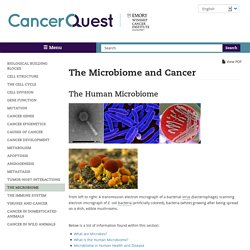 The Microbiome and Cancer
