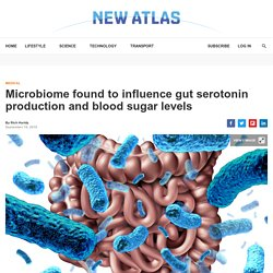 Microbiome influences gut serotonin and blood sugar levels