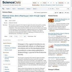 Maternal stress alters offspring gut, brain through vaginal microbiome