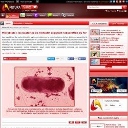 Microbiote : les bactéries de l'intestin régulent l'absorption du fer
