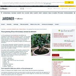 Ficus ginseng (Ficus microcarpa) : entretien, taille, arrosage, bonsaï