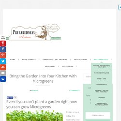 Microgreens - Bring the Garden Into Your Kitchen