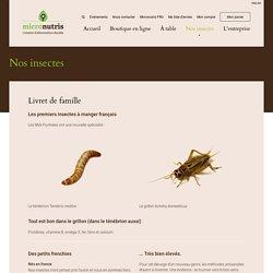 Elevage français d'insectes comestibles