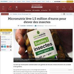 Micronutris lève 1,5million d'euros pour élever des insectes
