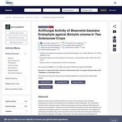 MICROORGANIMS 31/12/19 Antifungal Activity of Beauveria bassiana Endophyte against Botrytis cinerea in Two Solanaceae Crops