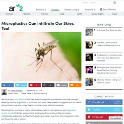 Microplastics Infiltrate The Insect World, Too