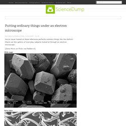 Putting ordinary things under an electron microscope
