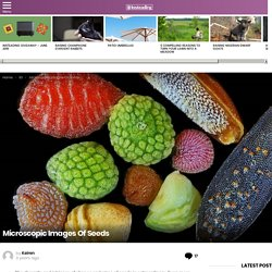 Microscopic Images Of Seeds