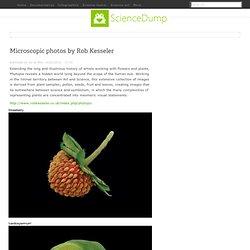 Microscopic photos by Rob Kesseler