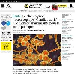 """Le champignon microscopique """"Candida auris"""", une menace grandissante pour la santé publique"""