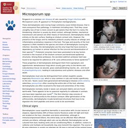 Microsporum spp - Cat