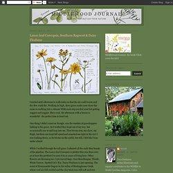 Lance-leaf Coreopsis, Southern Ragwort & Daisy Fleabane