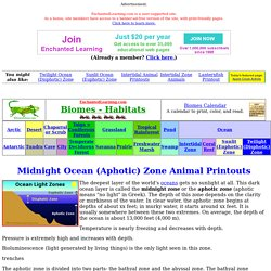 Midnight Ocean (Aphotic) Zone
