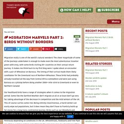 *****Wildlife corridors: Migration Marvels Part 2: Birds without Borders - Thames Basin Heaths