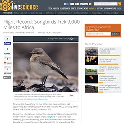 Flight Record: Songbirds Trek 9,000 Miles to Africa | Longest Animal Migrations & Arctic Birds | African Birds