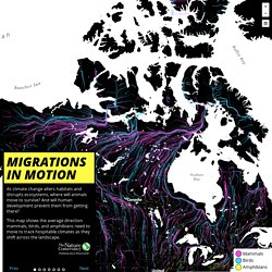 Migrations in Motion - The Nature Conservancy