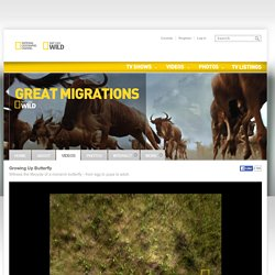 Watch Great Migrations Videos Online - National Geographic Channel - Canada
