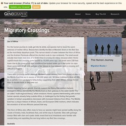 Migratory Crossings