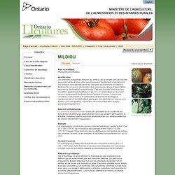 Mildiou - tomates - LIcultures Ontario