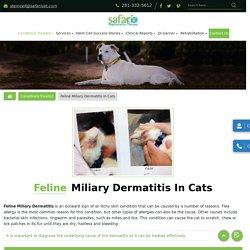 Feline Miliary Dermatitis Treatment Hospital in League City