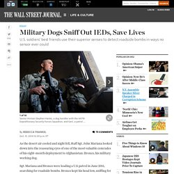 Military Dogs Sniff Out IEDs, Save Lives