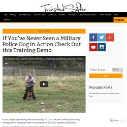If You've Never Seen a Military Police Dog in Action Check Out this Training Demo