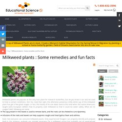 Milkweed plants : Some remedies and fun facts