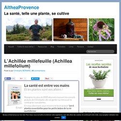 L'Achillée millefeuille (Achillea millefolium)