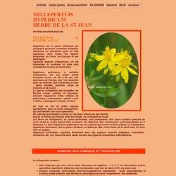 Le millepertuis, Hypericum perforatum, plante medicinale antidepressive et calmante
