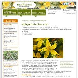 Millepertuis chez vous - Flora Medicina, école d'herboristerie