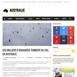 Des milliers d'araignées tombent du ciel en Australie